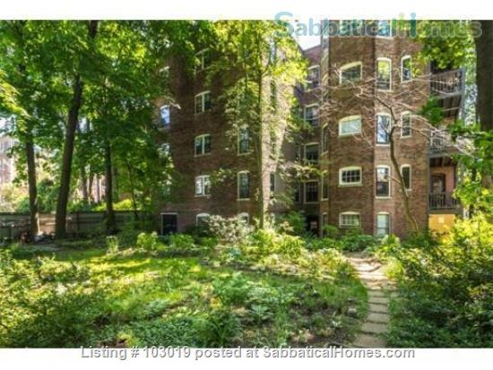 Beautiful, Sunny Apartment near Harvard Square Home Rental in Cambridge, Massachusetts, United States 6