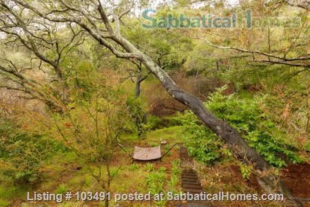 Peaceful North Berkeley in-law overlooking creek Home Rental in Berkeley, California, United States 7