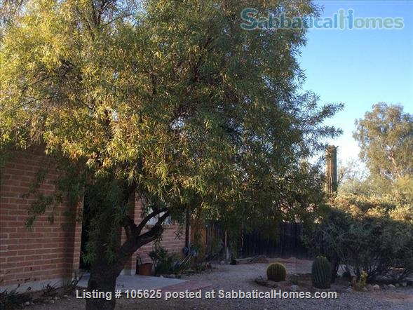 Rural Retreat 3 miles from Campus:  Furnished 4 BR, 3 Bath, Study, 1 Acre in Richland Heights West  Home Rental in Tucson, Arizona, United States 0
