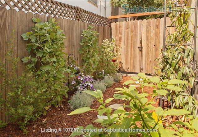 Garden Apartment in Desirable Grand Lake Area Home Rental in Oakland, California, United States 9