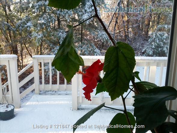 Swiss and Art Ambiance Home Rental in Northampton, Massachusetts, United States 3