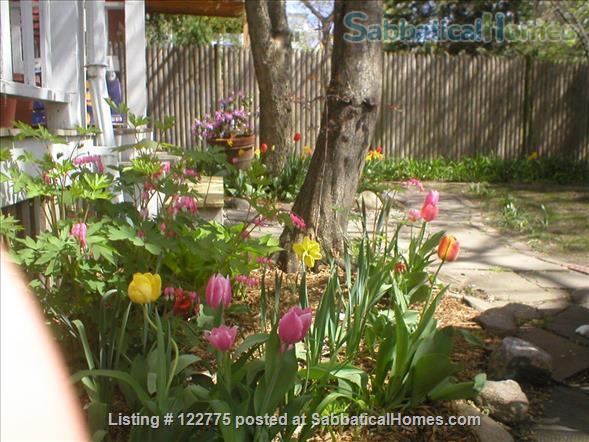 Open,sunny 3 bedroom condo, 12 minute walk to Harvard Square. Home Rental in Cambridge, Massachusetts, United States 3