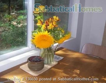Serenity Central:  A place to listen to the wind and renew your soul Home Rental in Dutch Flat, California, United States 4