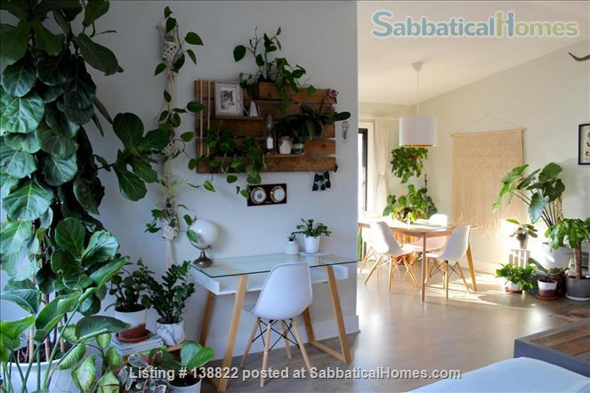 Little Jungle in North Park, perfect for SDSU or USD. Home Rental in San Diego, California, United States 1