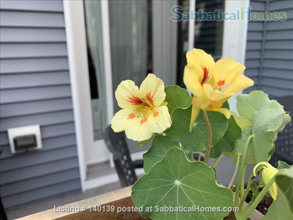 Perfect Cambridge home! Home Rental in Cambridge, Massachusetts, United States 6