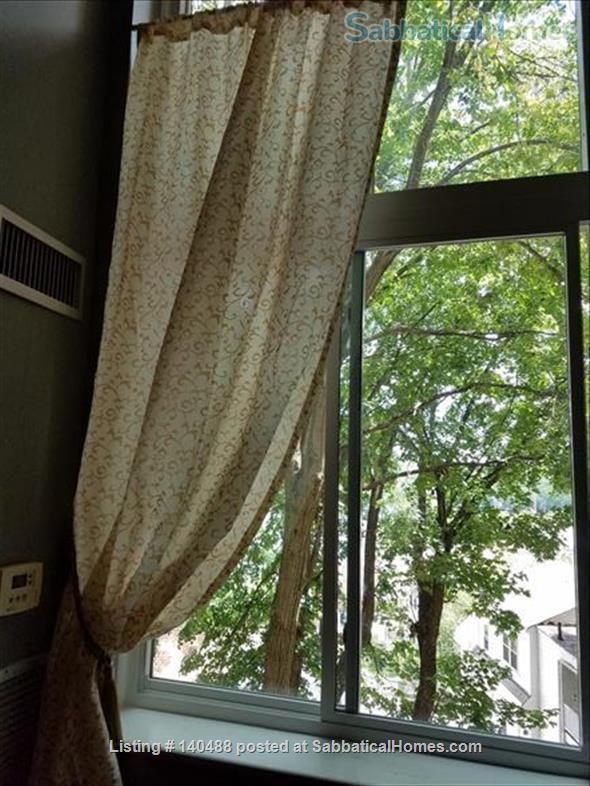 Sunny Spacious 2 BR in Boston Home Rental in Boston, Massachusetts, United States 4