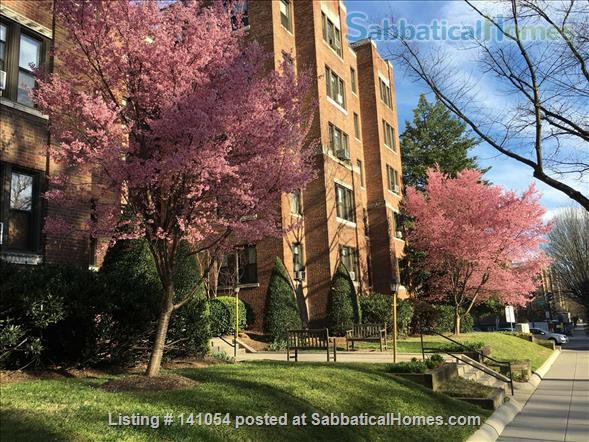 Charming, spacious, light filled 1 BR+large den condo - furnished, partially furnished or unfurnished  condo Cleveland Park/Van Ness Home Rental in Washington, District of Columbia, United States 8