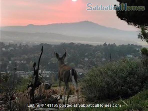 Robinson Caruso like hilltop magical retreat. Home Rental in El Sobrante, California, United States 0