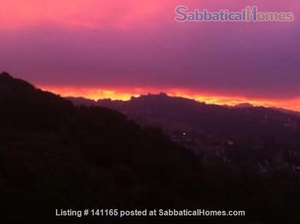 Robinson Caruso like hilltop magical retreat. Home Rental in El Sobrante, California, United States 2