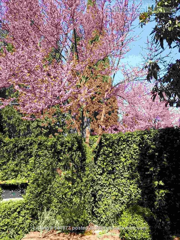 Costa S. Giorgio Forte Belvedere nice, quiet flat, garden, WIFI Home Rental in Florence, Toscana, Italy 1