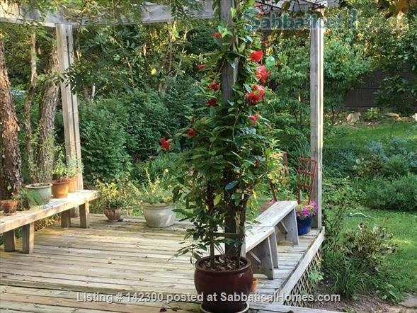 Beautiful 3 bedroom garden home in Baltimore Home Rental in Baltimore, Maryland, United States 3