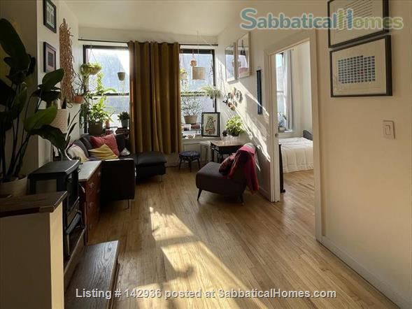 Sunny Room in Plant filled 2/1  Home Rental in Clinton Hill, New York, United States 1