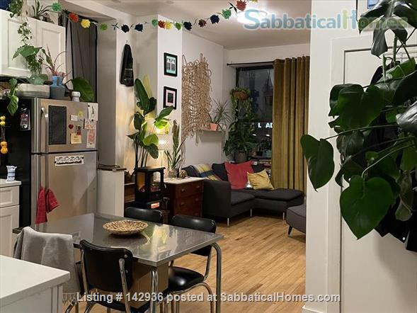 Sunny Room in Plant filled 2/1  Home Rental in Clinton Hill, New York, United States 8