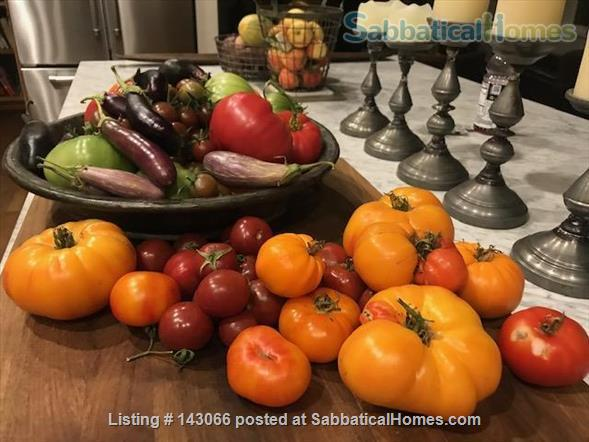 Beautiful Rural Wine Country Home For Rent Home Rental in Santa Rosa, California, United States 3