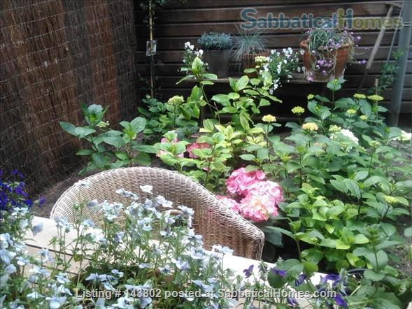 Ground floor apartment with garden  in De Pijp Home Rental in Amsterdam 1 - thumbnail