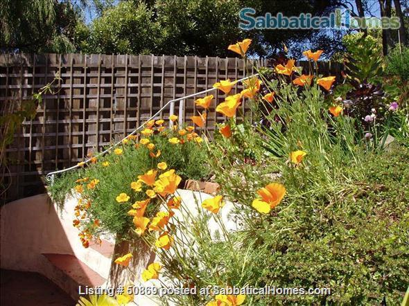 SF: CHARM, LOCATION & VIEW $4200 monthly 2 br 2 ba Home Rental in San Francisco, California, United States 2
