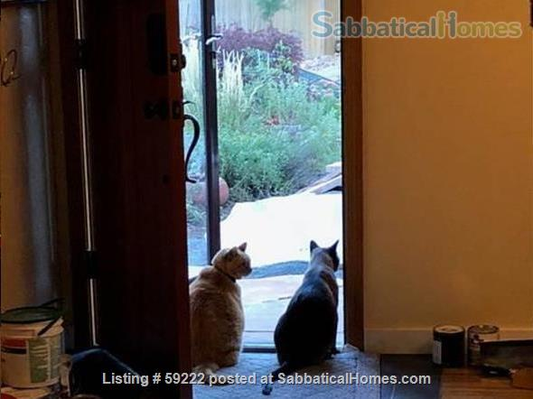 Lovely south Boulder home to share Home Rental in Boulder, Colorado, United States 9