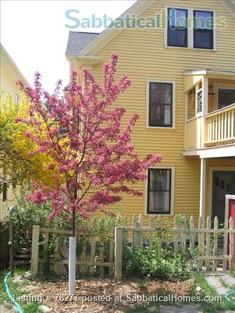 Lovely Somerville 4 BR Apartment near Harvard, Tufts, MIT Home Rental in Somerville, Massachusetts, United States 1