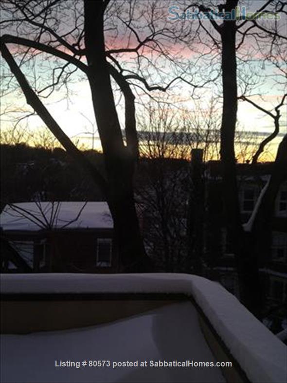 Beautiful Sunny Washington Sq Brookline 3 BR Condo  Home Rental in Brookline, Massachusetts, United States 9