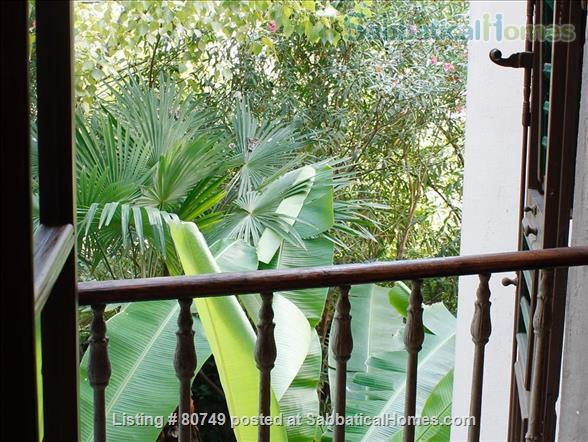 Spacious, elegant apartment in S.M. Novella Home Rental in Florence, Toscana, Italy 0