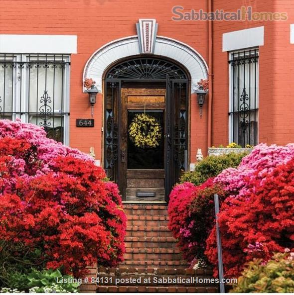 Nice One bedroom English Basement Apartment in Capitol Hill Home Rental in Washington, District of Columbia, United States 0