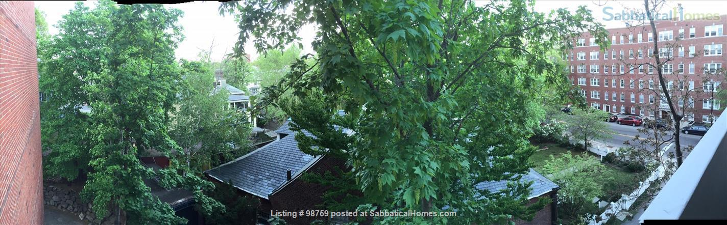 Sunny, Furnished Studio w/ Magnificent Treetop View near Harvard Square Home Rental in Cambridge, Massachusetts, United States 0